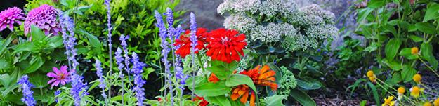 health-flowers